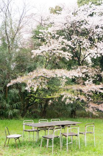 桜花祭2015-58