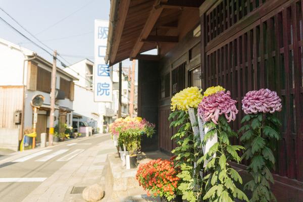 枚方宿街道菊花祭-7