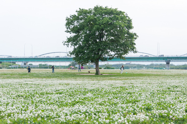 淀川-24