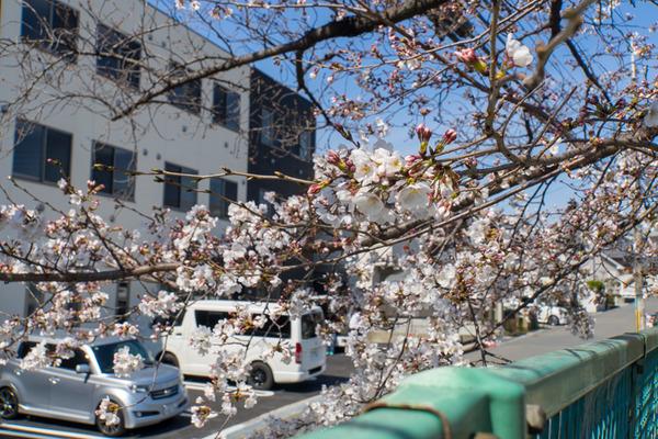 桜-2003262