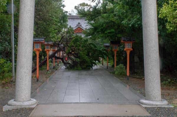 津田-1809041-8