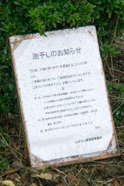 山田池公園-17101546