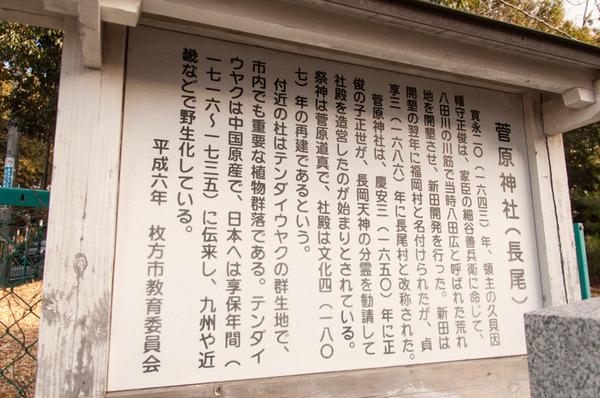 長尾-202