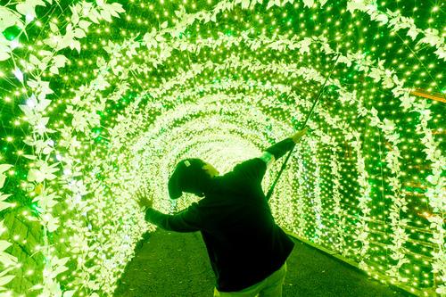 ひらかたパーク光の遊園地-151111112