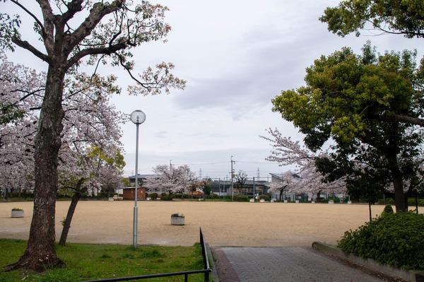 桜329-21032815
