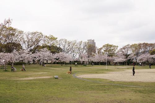 楠葉東公園
