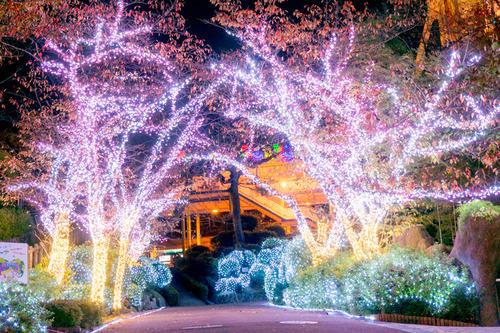 ひらかたパーク光の遊園地-15111155