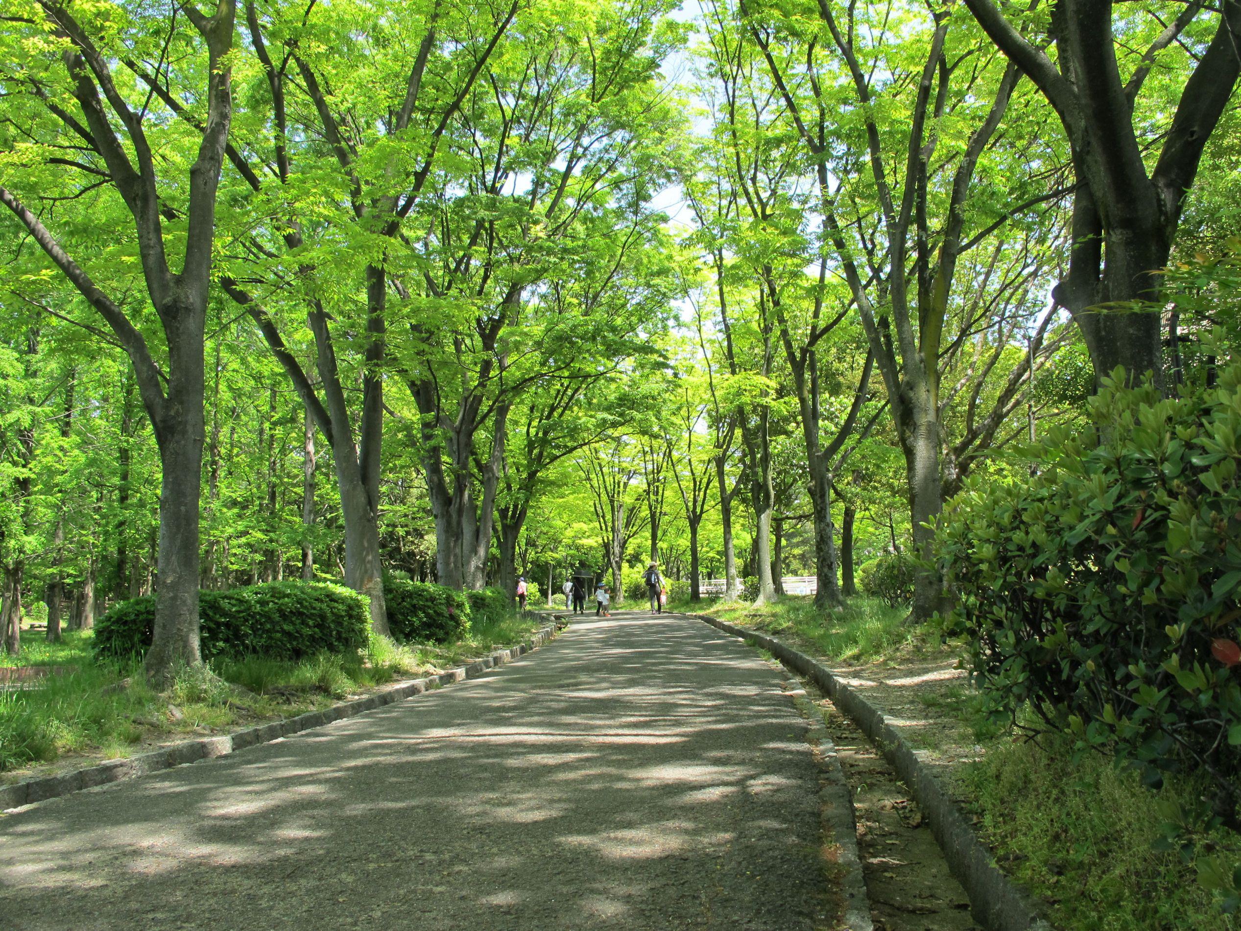 楠葉東公園の新緑03