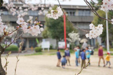 牧野公園の桜-9