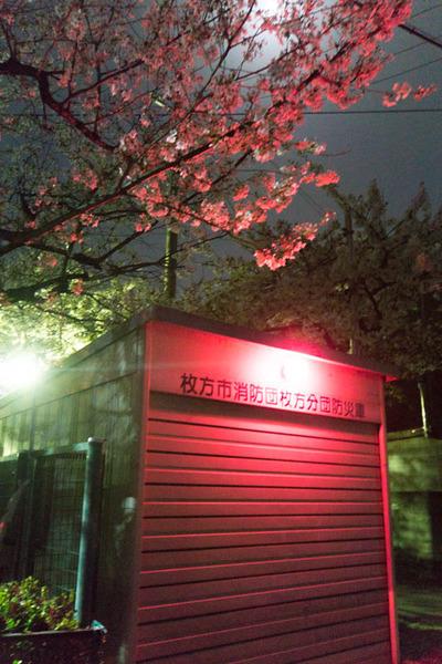 伊加賀公園-1803312