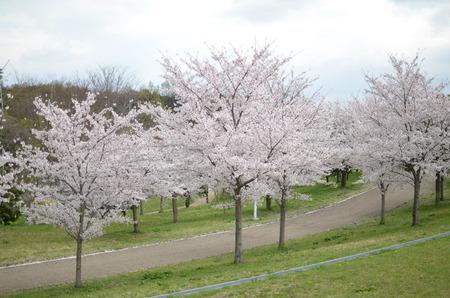 山田池公園130403_01