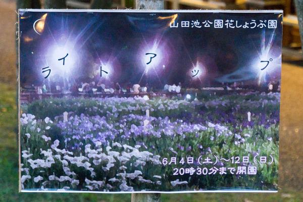 花しょうぶ-16060413