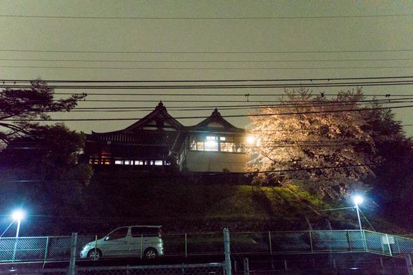 桜-1704112