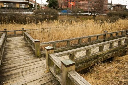 地蔵池の猫140204-02