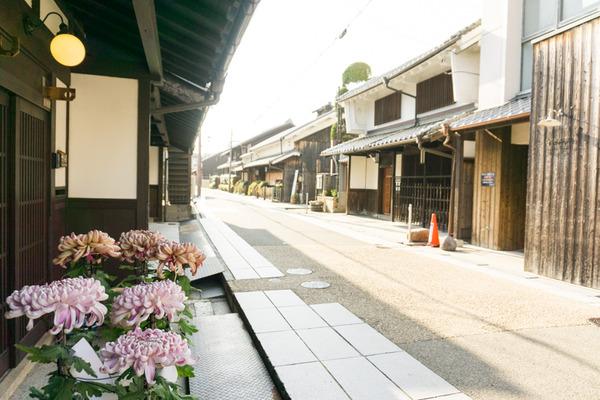 枚方宿街道菊花祭-12