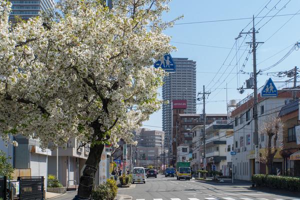 桜-2003264