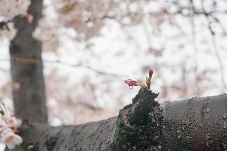伊加賀公園-4