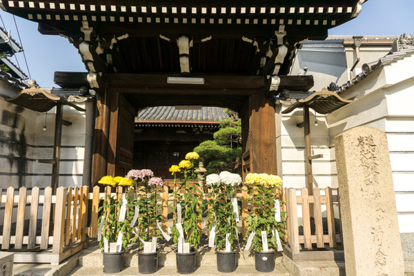 枚方宿街道菊花祭-4