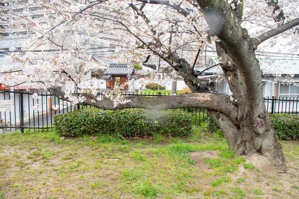 桜329-2103289