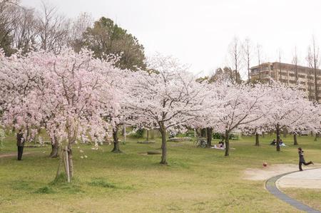 楠葉東公園-1