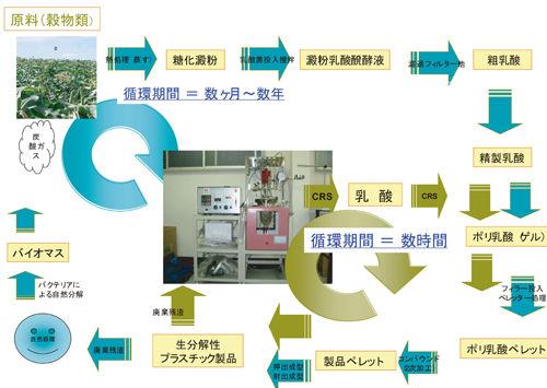 ポリ乳酸サイクル