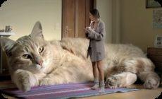 巨大なネコがいる部屋