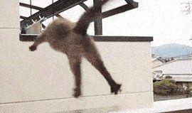 ジャンプ失敗ネコ01