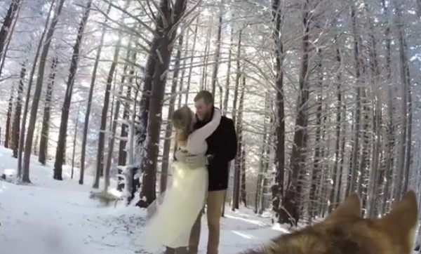 イヌ目線の結婚式