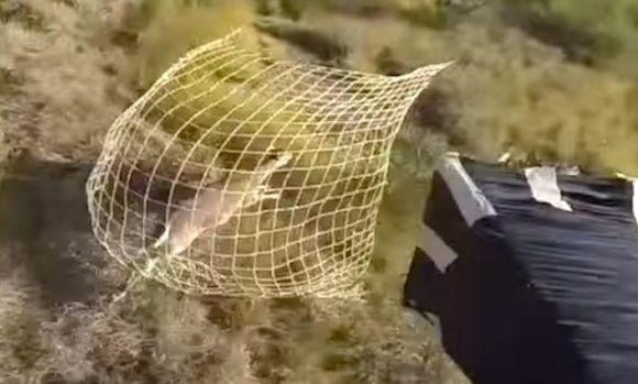ネット銃でシカを捕まえる自己視点映像