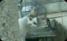 覗き込むようにこちらを見ているネコ