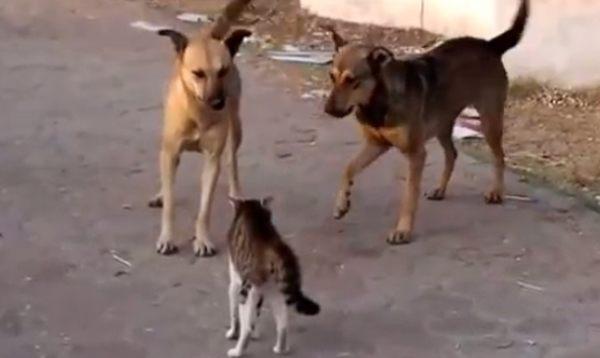 ひるまないネコ