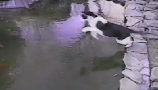 氷の池で滑るニャンコ