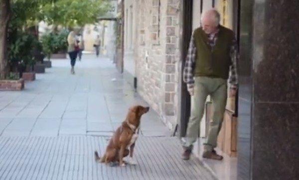 飼い主の死は死ではないことを知っている犬