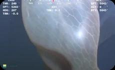カスケード・クリーチャー、深海の謎の生物画像