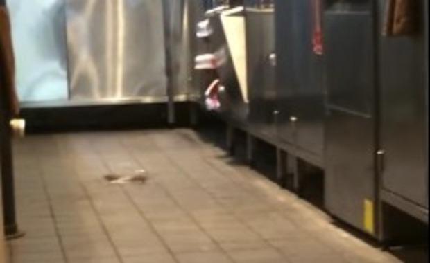 マクドナルドのネズミ