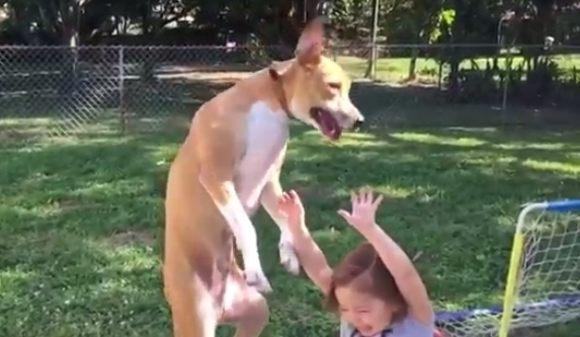 ワンコが少女を押し倒す。