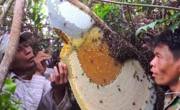 カンボジアのハニ―ハンター