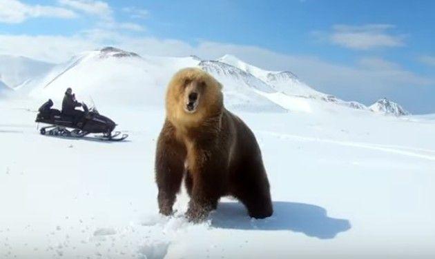 クマとスノーモービル