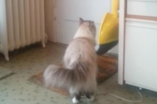兵士の帰りを待つネコ