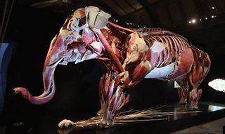 動物の骨格、人体模型、肉付き標本画像
