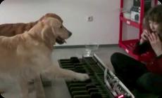 2匹のワンコが笛の音に合わせてピアノを弾く