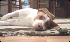 ゼンマイのマウスと遊ぶ犬