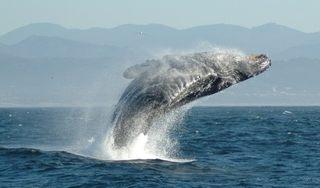 捕鯨の必要性