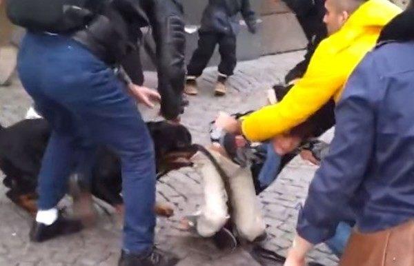 スウェーデンで犬が子供を襲う