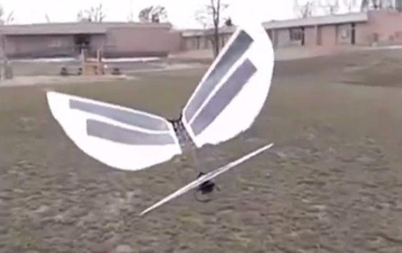 ロボットのトリがタカに襲われる