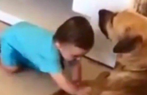 赤ちゃんに噛みつく犬