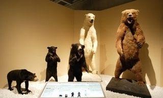 ツキノワグマやクマの大きさ比べ、画像、写真
