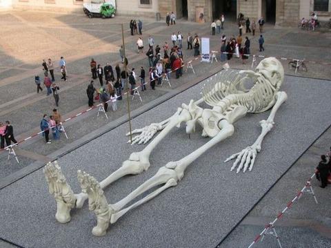 巨大骨アート