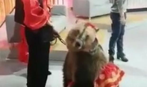 クマが女性を襲う