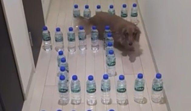 イヌ用のペットボトル迷路